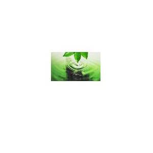 Fp Olio essenziale puro - Basilico 30 ml